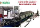 Dây chuyền sản xuất bánh tráng tự động